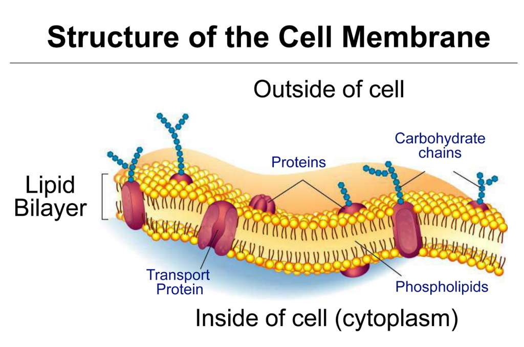 Drugs that do not penetrate cell membranes to function