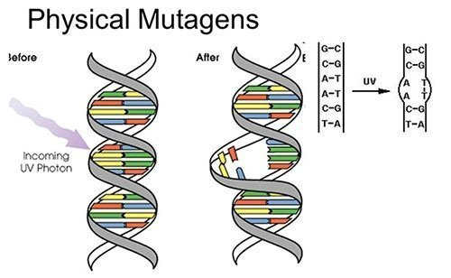 Physical Mutagens