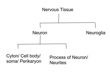 An Overview of Nervous System in animals.