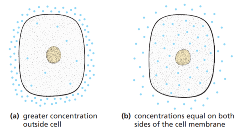 molecules entering cell by diffusion